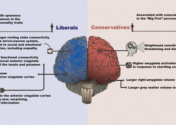 "Political Ideologies - ""Conservative"" vs. ""Liberal"" Brains: The Difference According to Neuroscience"