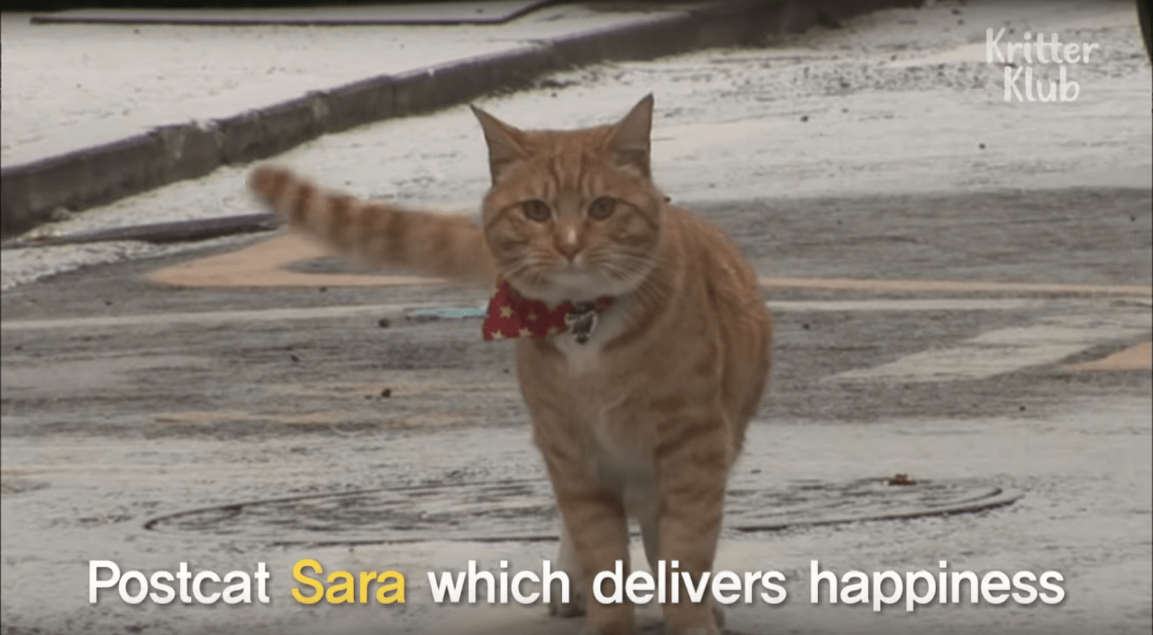sara-mail-delivery-cat