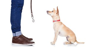Dog waiting for walk with leash