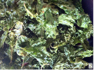 Kale chips http://wp.me/p3iY4S-ry
