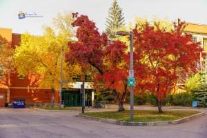 UofA, Edmonton, AB