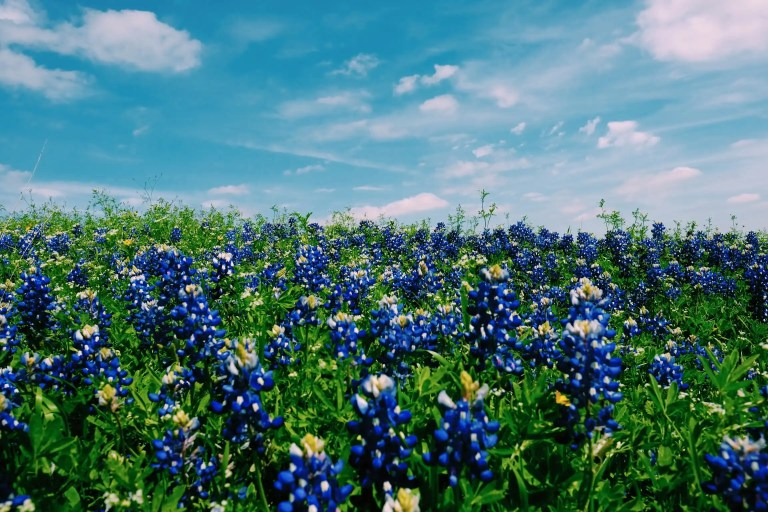 texas travel series for families