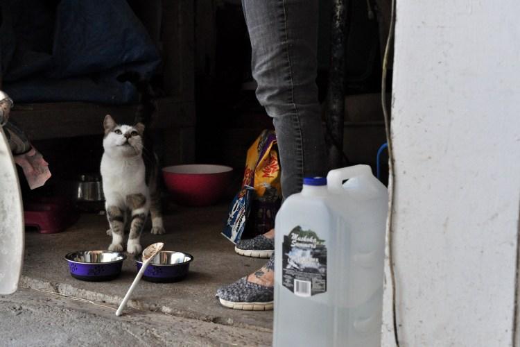 Feral cat waiting for dinner