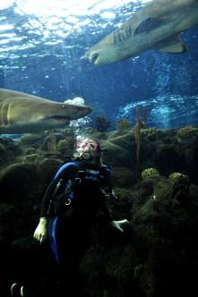 Shark DIve 151