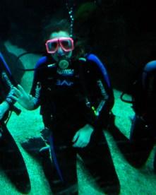 Shark Dive 5