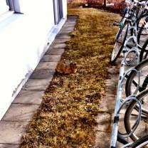 Haren vaktar fortfarande