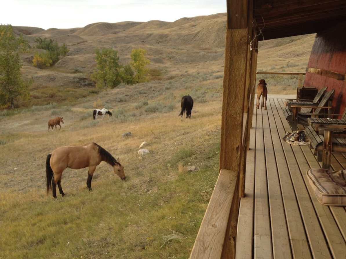 Horses all around