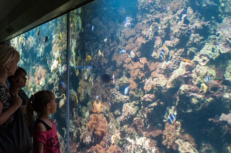 Im Aquarium Leipziger Zoo