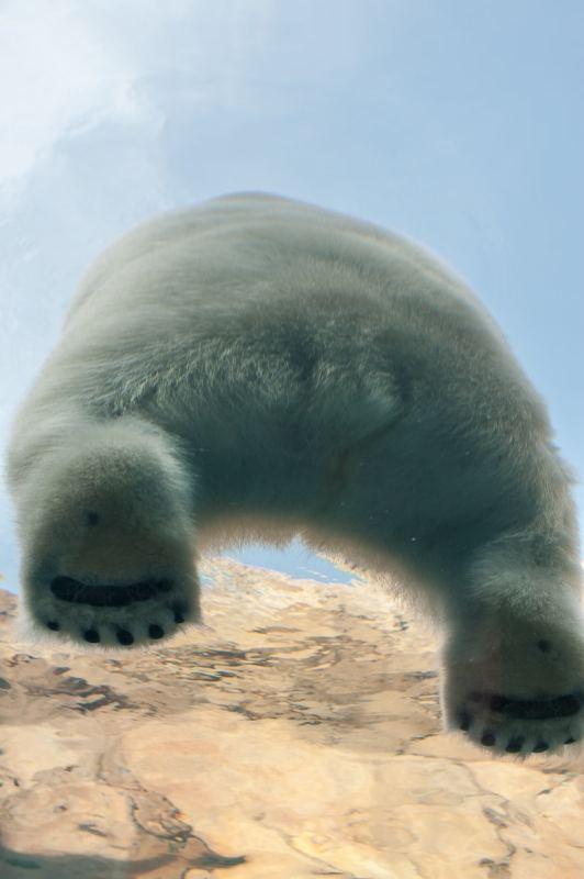 Fluffy Polar Bear Butt