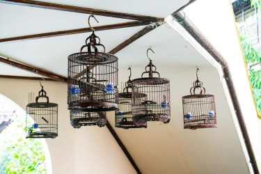 Vogelkäfige im Außenbereich der Bar
