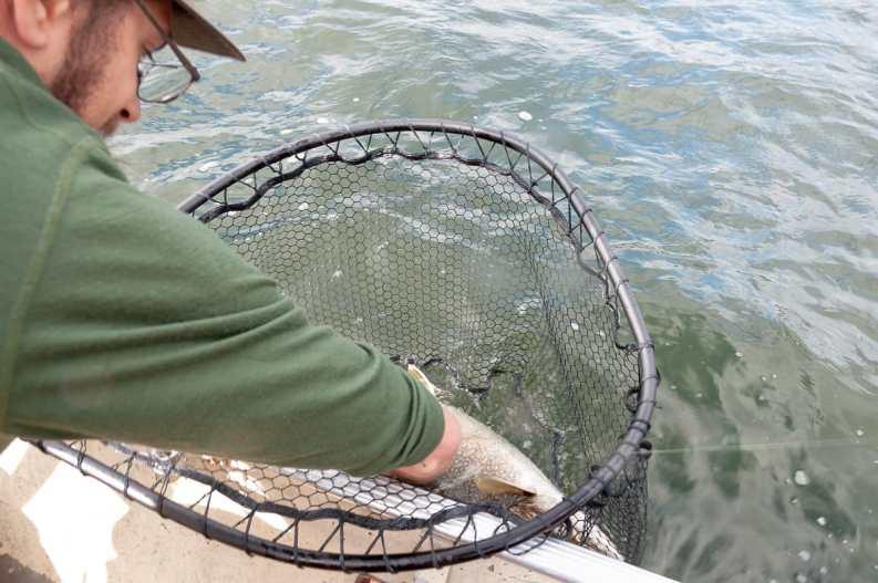 Wir haben einen Fisch gefangen!