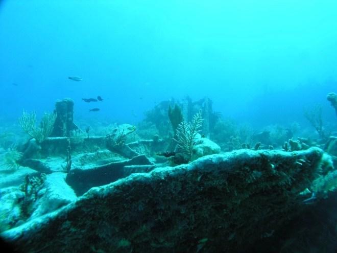 Benwood Shipwreck snorkeling