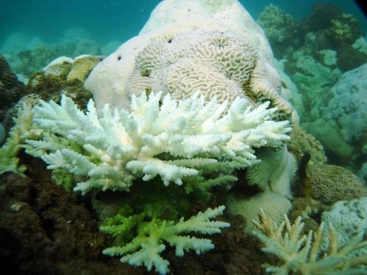 dead-bleached-reefs-in-kuwait