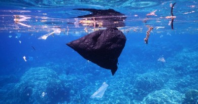 Underwater trash in Cannes - Facts behind the shine