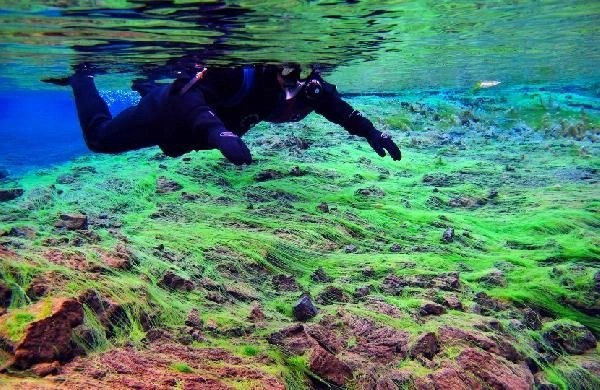 Silfra fissure cold water snorkeling tour
