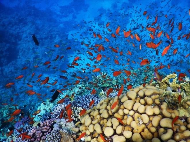 el faraana snorkeling temple reef 2