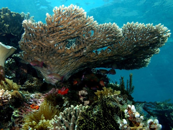 Coral triangle Philippines
