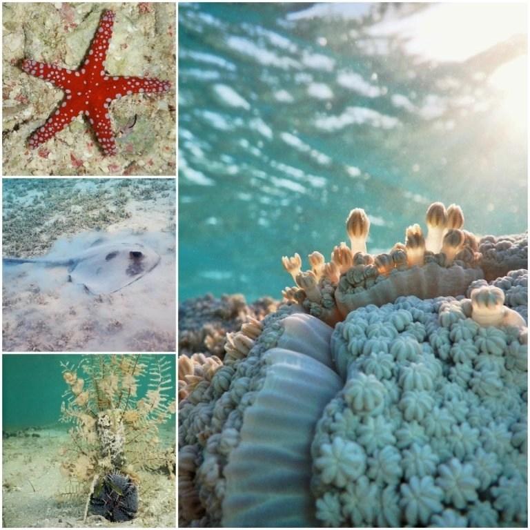 Blue Lagoon by the Coral Sea Sensatori Underwater Life