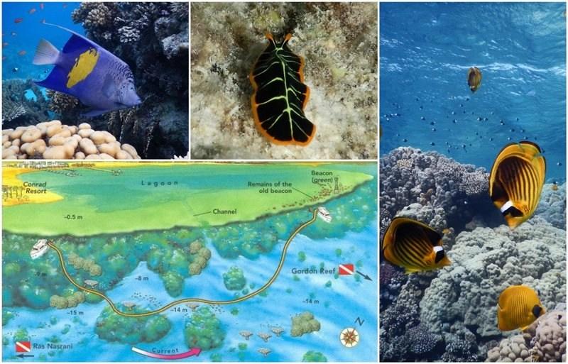 Ras-Ghamila-Montazah - Egypt - Sharm El Sheikh best snorkeling places