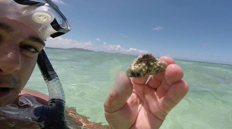 Snorkeling Kaiona Beach Oahu: Snorkeling's Unsung Hero of Hawaii