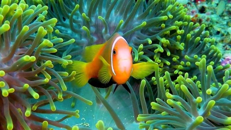 best-snorkeling-fihalhohi-island-housereef