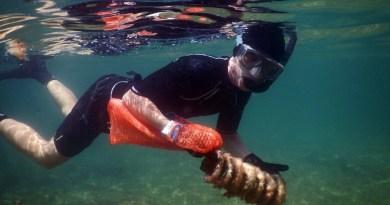 beach_cleanup_malta_index