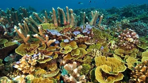 coral-cut-treatment