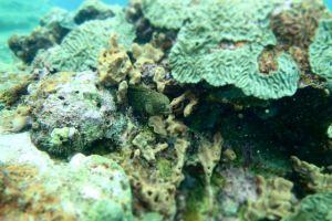 Spotted Morey Eel