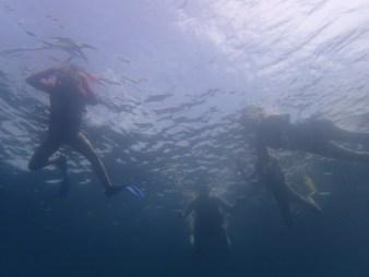 Family snorkelling fun