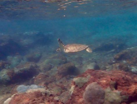 Zoe Snorkeling Tobago
