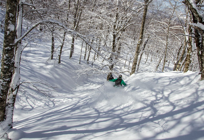 Skiing trees Tazawako CAT Tour