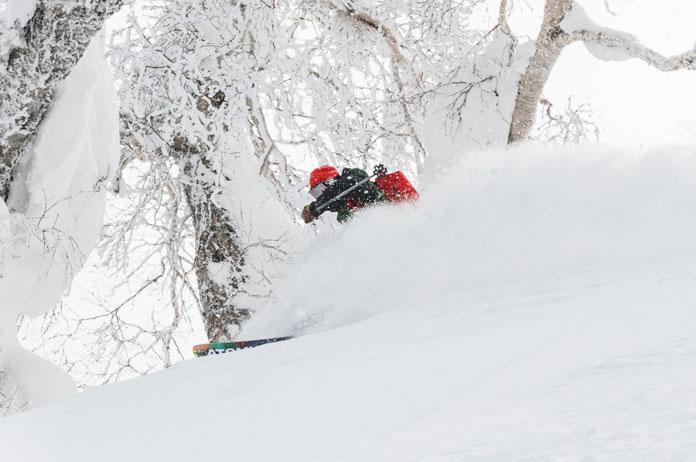 powder skiing trees in Hokkaido