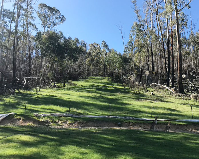 View of the original ski slope at Corin Forest Canberra in 2020, partially re-vegetated