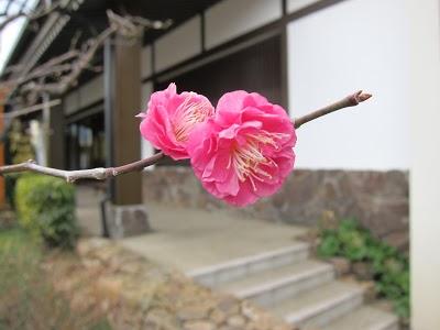 <!--:ja-->箱根湯本ぶらり旅。かまぼこ、鰻を食べて「天山湯治郷」に行ってきた。<!--:-->