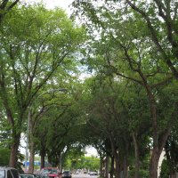 Tree-lined Streets of Norwood, Edmonton