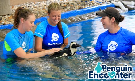 Gulf World Launches News Penguin Encounter in Panama City, Fla.