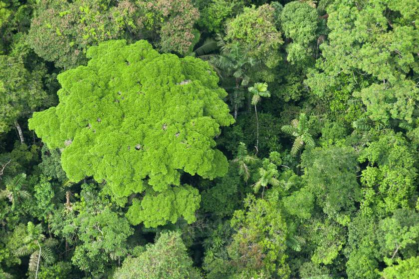 The canopy of the rainforest.