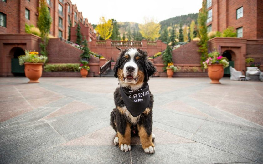 Be the Fur Butler at the St. Regis Aspen and take care of Kitty!