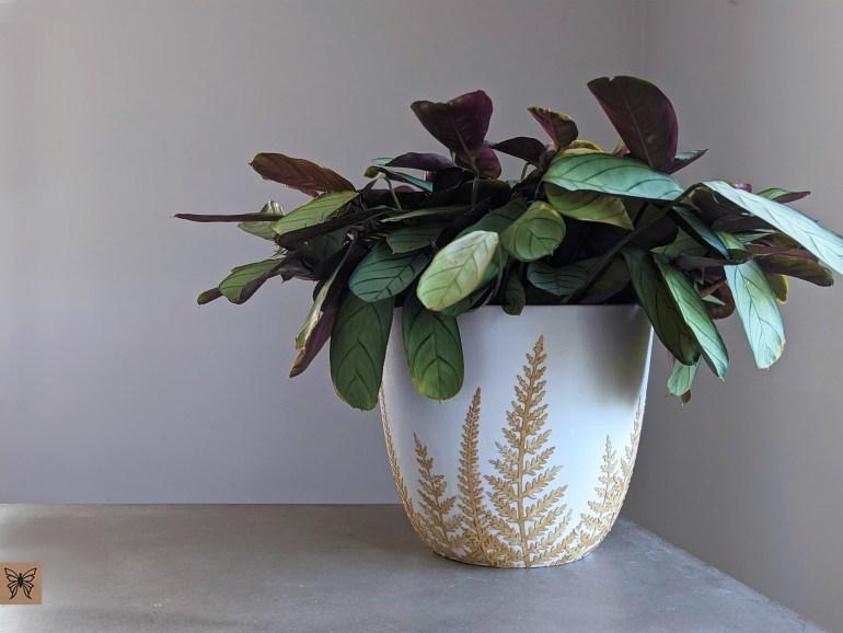 Decoupage plastic planter pot with Calathea prayer plant