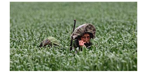 Camouflaged Israeli troops in a wheat field on Israel's border with Gaza.