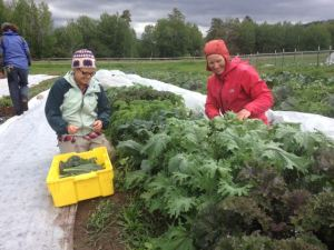Kelly and Jaime on a wet morning kale harvest