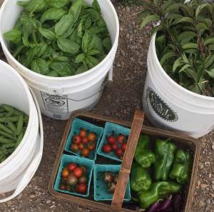 harvestbuckets