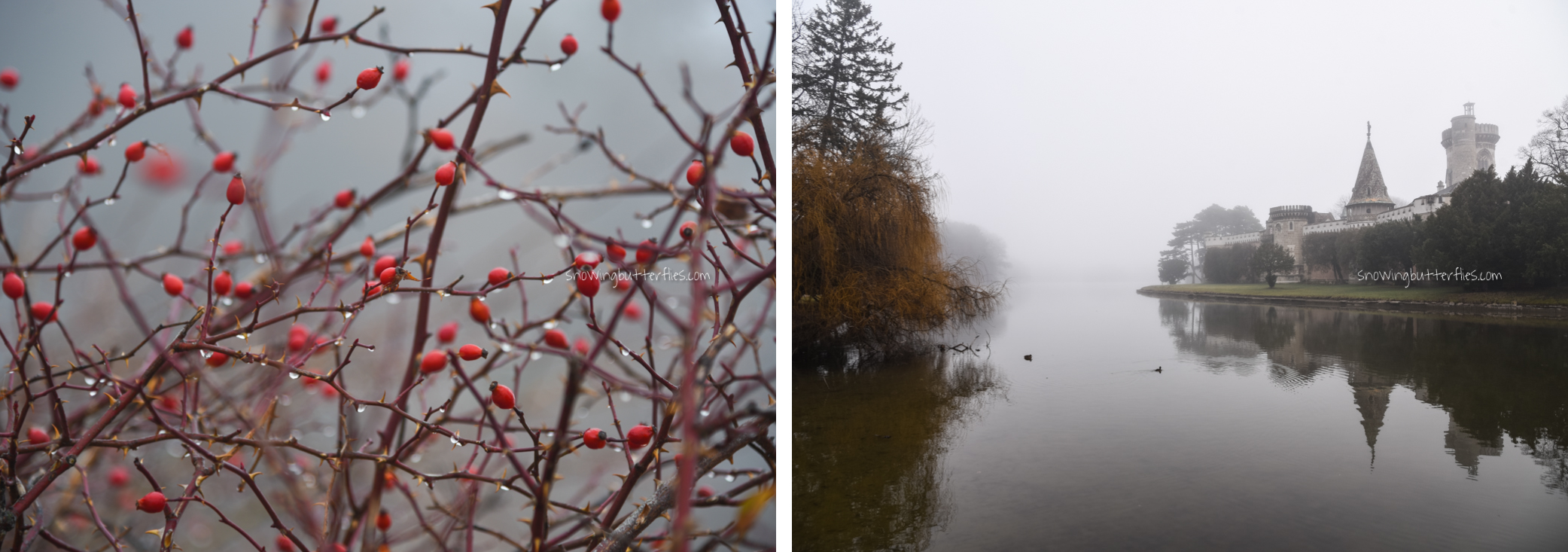 mariana perrone, austria, snowing butterflies, still life, landscape, seasons, laxenburg