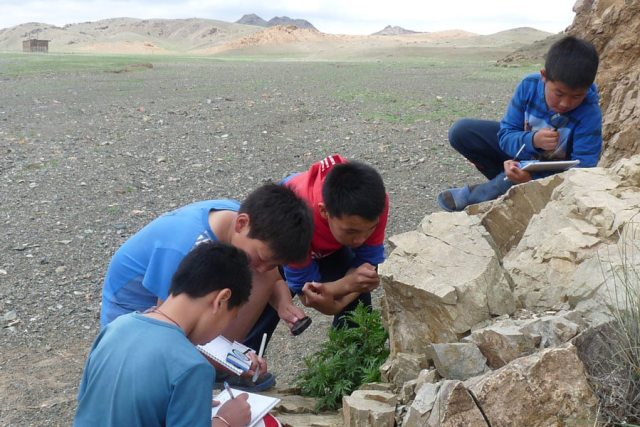 A group of boys is examining plants.