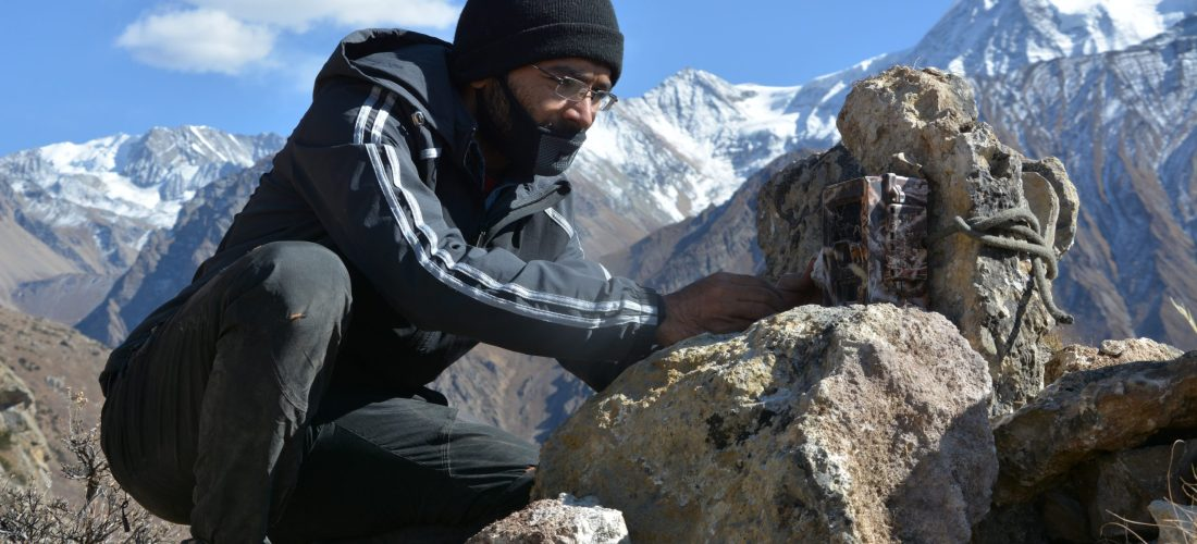 Snow leopard research and conservation in Nepal: Past, Present and Future