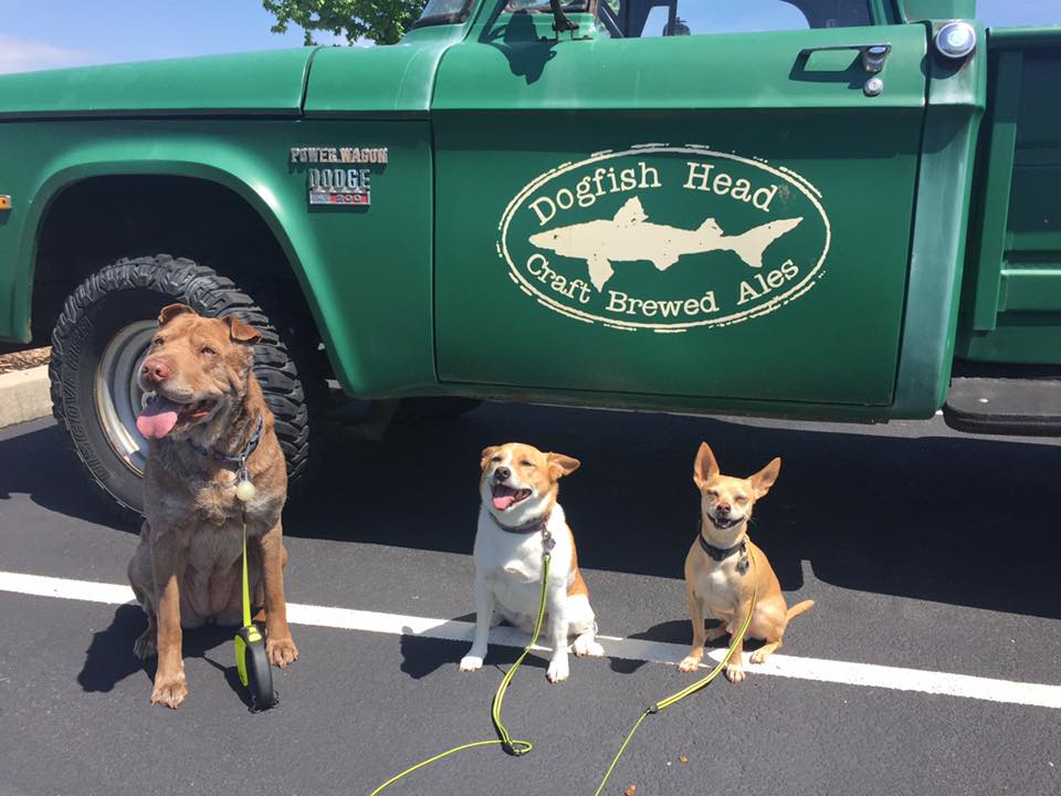 Dogs posing at Dogfish Head brewery