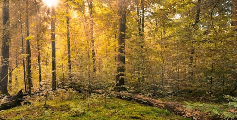 forest-copy-2-790×400