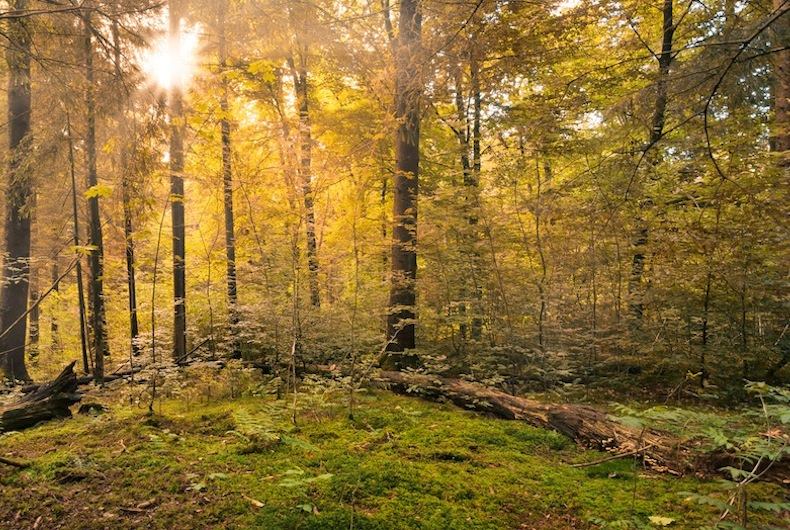 Fairytale Forest – Sunburst