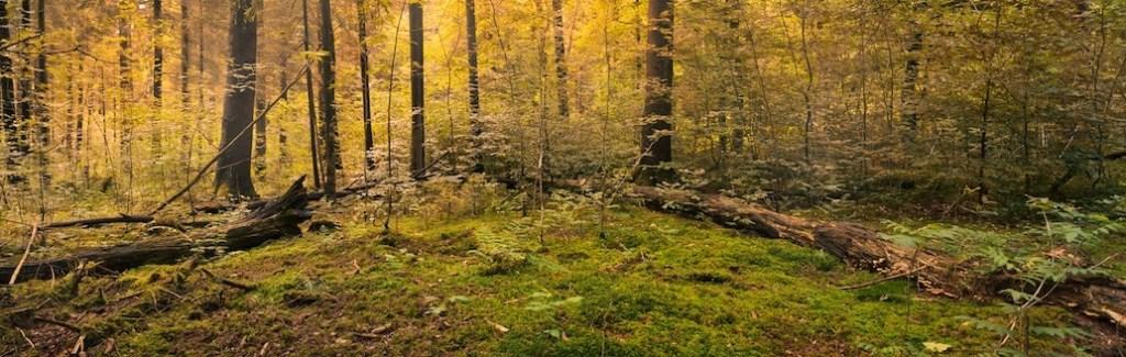 Fairytale Forest – Sunburst
