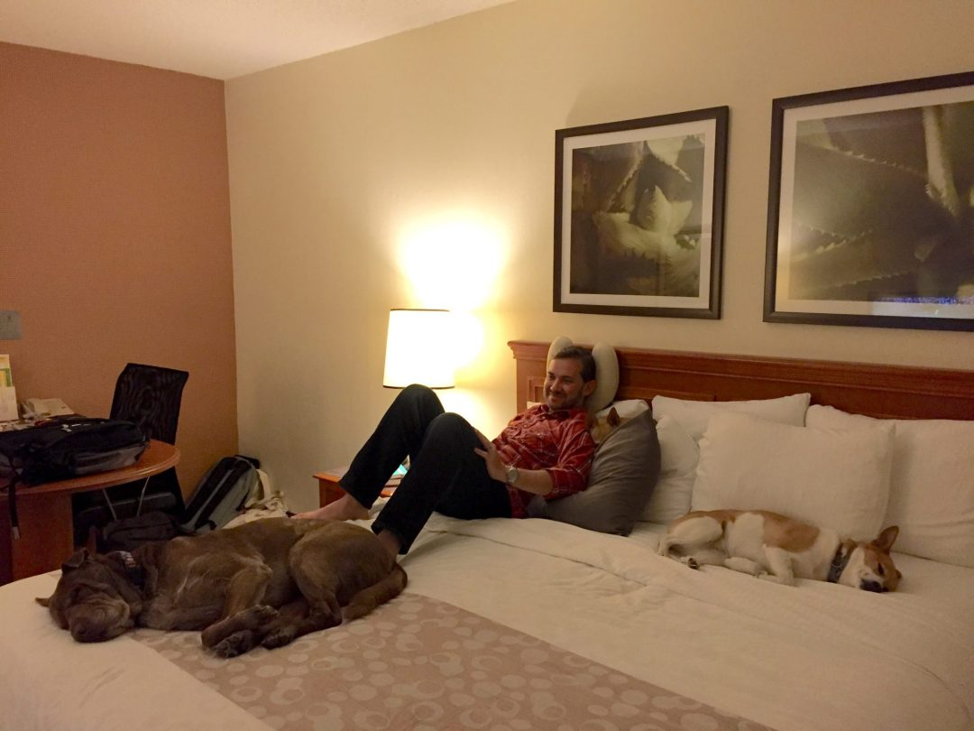 Chillin' through a heat wave in a La Quinta hotel. Thank goodness for their pet-friendliness!
